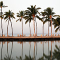 Palm Trees And Beach Chairs by Dan Peak