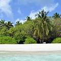 Palm Trees And Exotic Vegetation On The Beach Of An Island In Maldives by Oana Unciuleanu