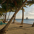 Palm Trees And Hammock On San Pedro by Panoramic Images