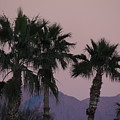 Palm Trees And Mountains At Sunset #1 by Jim Williams Jr