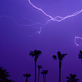 Palm Trees And Spider Lightning Striking by James BO  Insogna