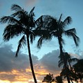 Palm Trees At Sunset by Charles HALL