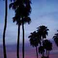 Palm Trees At Sunset by Jill Reger