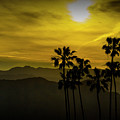 Palm Trees At Sunset With Mountains In California by Randall Nyhof