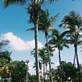 Palm Trees by Eloviano Maya