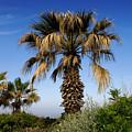 Palm Trees Growing Along The Beach by Keenpress