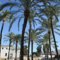 Palm Trees In Jerez by Chani Demuijlder