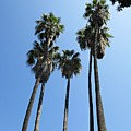 Palm Trees In Malaga by Chani Demuijlder