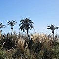 Palm Trees In Motril by Chani Demuijlder