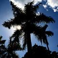 Palm Trees In Silhouette by Reva Steenbergen