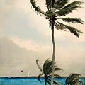Palm Trees - Nassau by Mountain Dreams