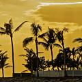 Palm Trees On Sunset Key At Sunset by Bob Slitzan