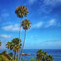 Palm Trees On The Pacific by Dan Miller