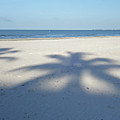 Palm Trees Over Fort Myers Beach Fort Myers Florida by Toby McGuire
