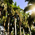 Palm Trees Under The Jamaican Sun by Patricia Awapara