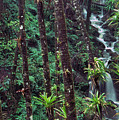 Palm Trunks And Waterfall El Yunque by Thomas R Fletcher