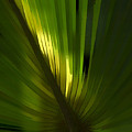 Palmetto Embrace by Marvin Spates