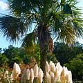 Palmetto Tree  by Susanne Van Hulst