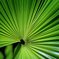 Palmgreen by Al Hurley