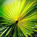 Radial Palm by Korrine Holt