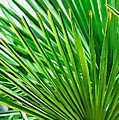 Palms 2 by Donna Bentley