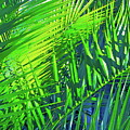 Palms 2 by Pamela Cooper