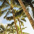 Palms Against Blue Sky by Dana Edmunds - Printscapes