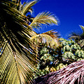 Palms All Around 2 by Lyle Crump