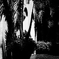 Palms And Arches by Susan Molnar