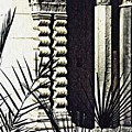 Palms And Columns by Sarah Loft
