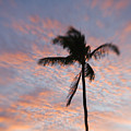 Palms And Pink Clouds by Ron Dahlquist - Printscapes