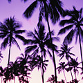 Palms And Purple Sky by Ron Dahlquist - Printscapes
