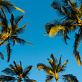 Palms And Sky by Alan Hart
