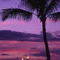 Palms And Tiki Torches by Ron Dahlquist - Printscapes