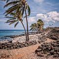 Palms At Lapakahi by Al Andersen