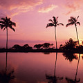 Palms At Still Lagoon by Carl Shaneff - Printscapes