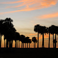Palms At Sunset by David Lee Thompson