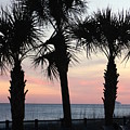 Palms At Sunset  by Gayle Miller
