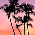 Palms At Sunset by William Waterfall - Printscapes