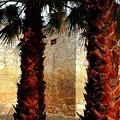 Palms Behind The Alamo by Beth Akerman