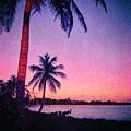 Palms In Honduras by Charles McKelroy