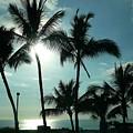 Palms In Silhouette by Lori Seaman