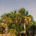 Palms - Naples Florida by Kim Hojnacki