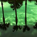 Palms Of Florida by Mayra Pau