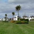Palms Of Ireland by Attila Balazs
