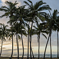Palms Of Kauai by Jon Glaser