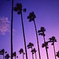 Palms by Steve Williams