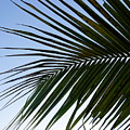 Palms To The Sky by Amanda Vouglas