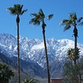 Palms With Snow by Randall Weidner
