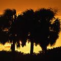 Palmset by David Lee Thompson